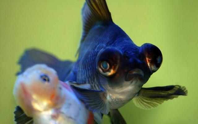 Paradisi d 39 acqua di barale paolo cuccioli acquari for Pesce pulitore acqua dolce fredda