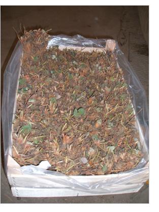 Canalis agricoltura di canalis mattia agricoltura for Fragole piante vendita